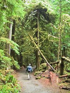 Sol Duc Rainforest, Olympic National Park, Washington (12)