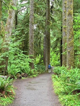 Sol Duc Rainforest, Olympic National Park, Washington (3)