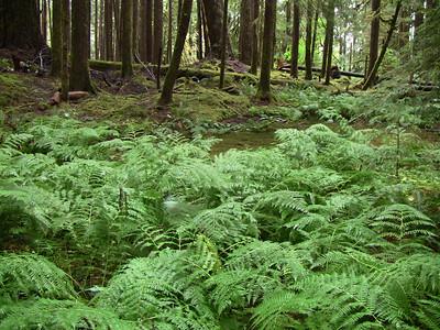 Sol Duc Rainforest, Olympic National Park, Washington (11)