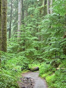 Sol Duc Rainforest, Olympic National Park, Washington (7)