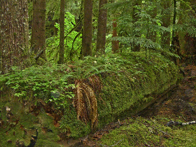 Sol Duc Rainforest, Olympic National Park, Washington (6)