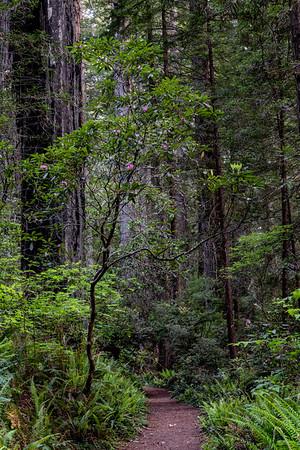 California; Cresent City; Damnation Creek Trail; USA