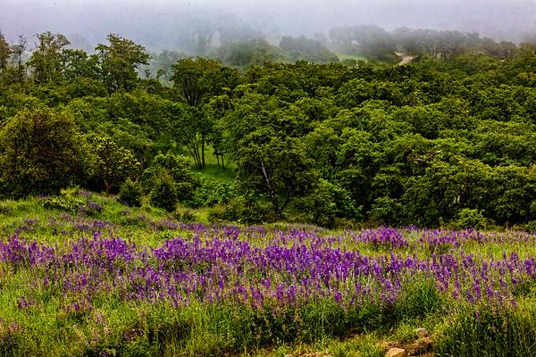 USA; California; Cresent City; Redwoods National Parl; Bold Hills