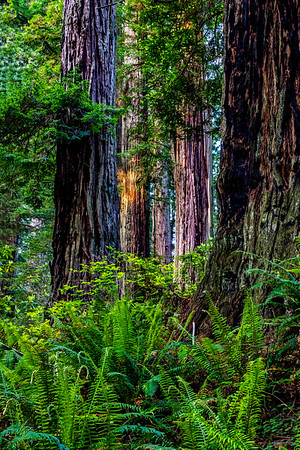 California; Cresent City; Damnation Creek Trail; USA