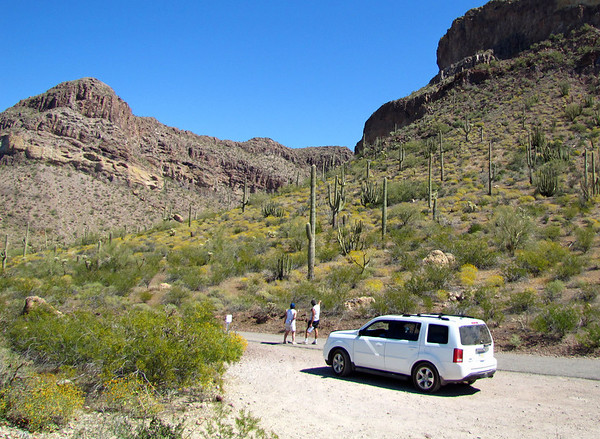 Organ Pipe Cactus National Monument, Arizona (7)