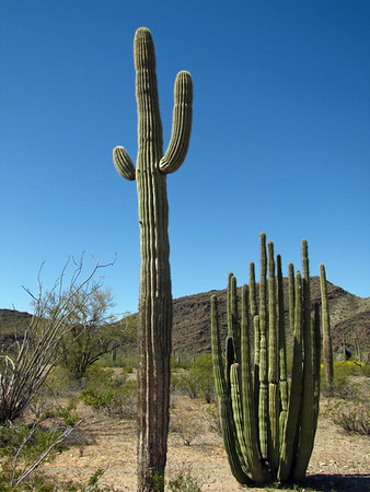 Organ Pipe Cactus National Monument, Arizona (2)