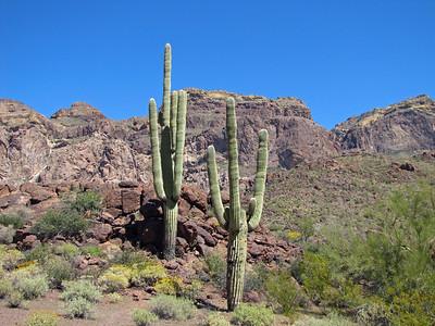 Organ Pipe Cactus National Monument, Arizona (22)