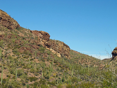 Organ Pipe Cactus National Monument, Arizona (13)