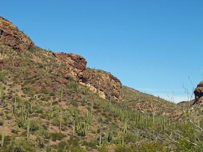 Organ Pipe Cactus National Monument, Arizona (13)