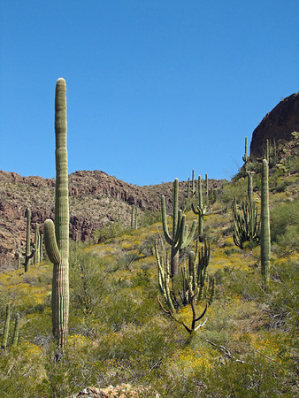 Organ Pipe Cactus National Monument, Arizona (16)