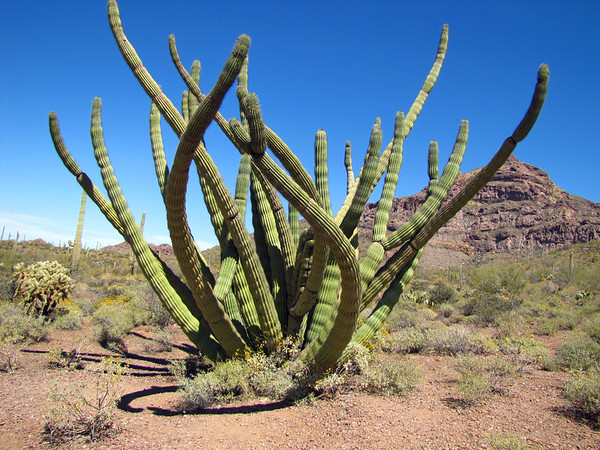 Organ Pipe Cactus National Monument, Arizona (8)