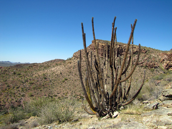 Organ Pipe Cactus National Monument, Arizona (15)