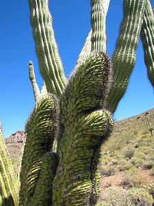 Organ Pipe Cactus National Monument, Arizona (18)