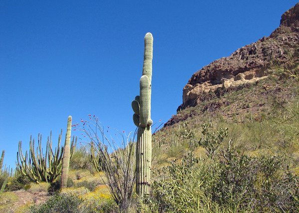 Organ Pipe Cactus National Monument, Arizona (14)