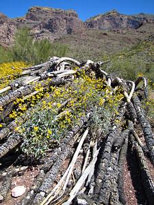 Organ Pipe Cactus National Monument, Arizona (24)