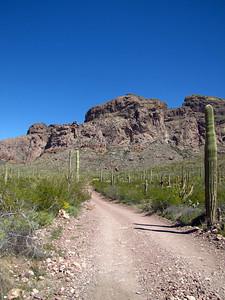 Organ Pipe Cactus National Monument, Arizona (21)