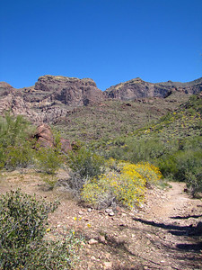 Organ Pipe Cactus National Monument, Arizona (23)