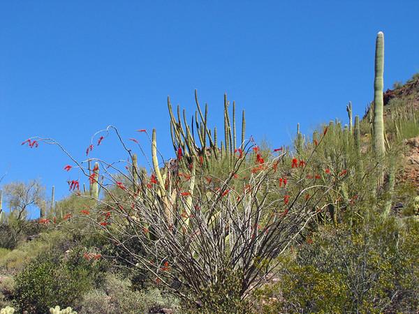 Organ Pipe Cactus National Monument, Arizona (6)