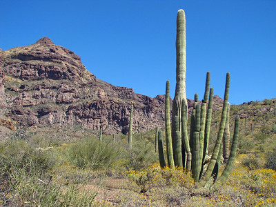 Organ Pipe Cactus National Monument, Arizona (19)