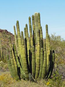 Organ Pipe Cactus National Monument, Arizona (11)