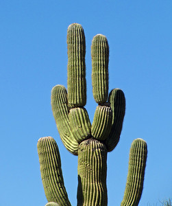 Organ Pipe Cactus National Monument, Arizona (10)