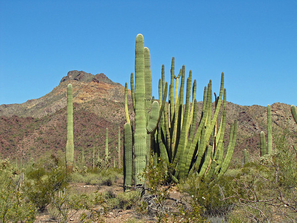 Organ Pipe Cactus National Monument, Arizona (4)