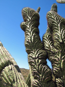 Organ Pipe Cactus National Monument, Arizona (17)