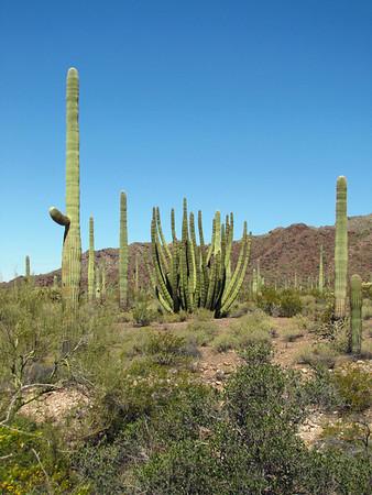 Organ Pipe Cactus National Monument, Arizona (5)