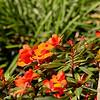 Flowers in the wind, Garden Inn Grounds