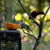 Arguing over breakfast, Garden Inn Grounds
