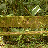 Moss covers everything in the forests, Volcan Baru Hike