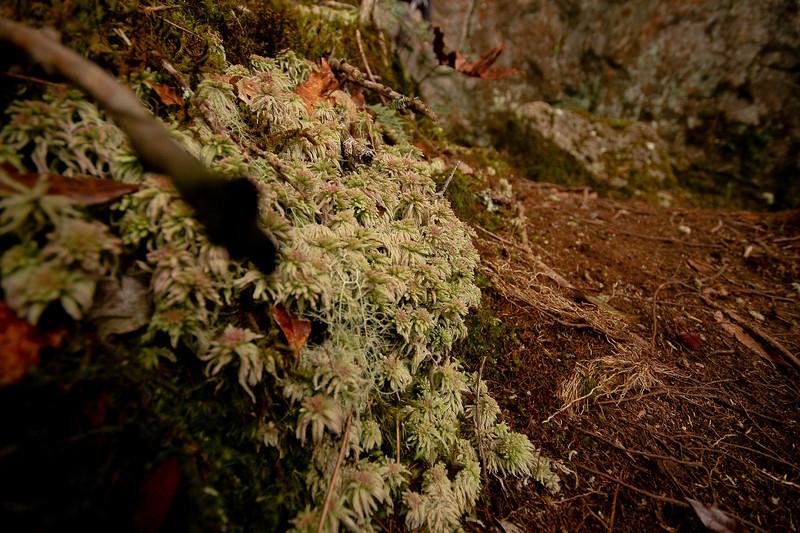 Tree Moss, Volcan Baru Hike