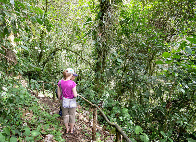 Cloud Forest hike