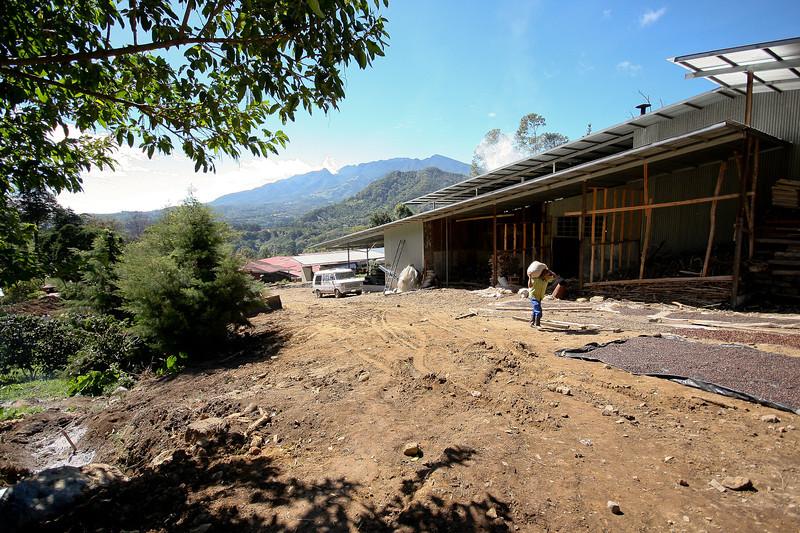 Kotowa Coffee Plantation