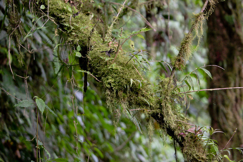 Tree moss, Cloud Forest hike