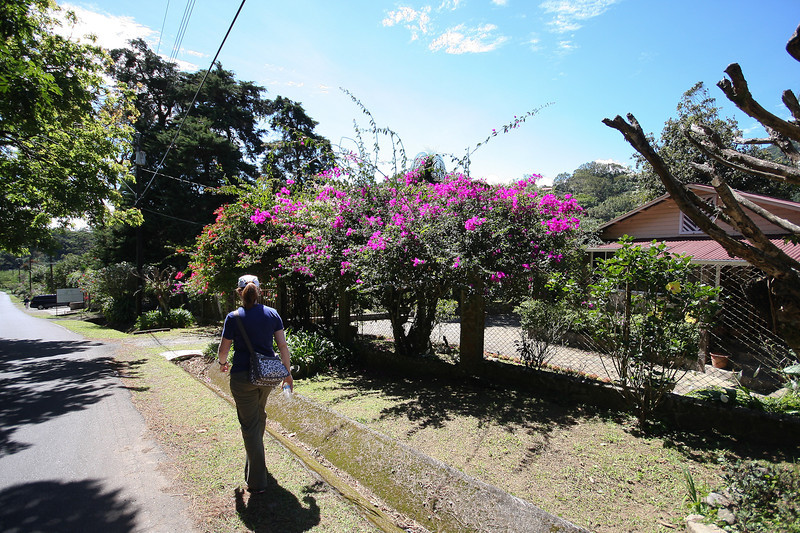Walking down to Boquete from our Hotel - Every house had flowers and a garden outside