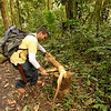 Our guide cutting out a heart of palm, Volcan Baru Hike