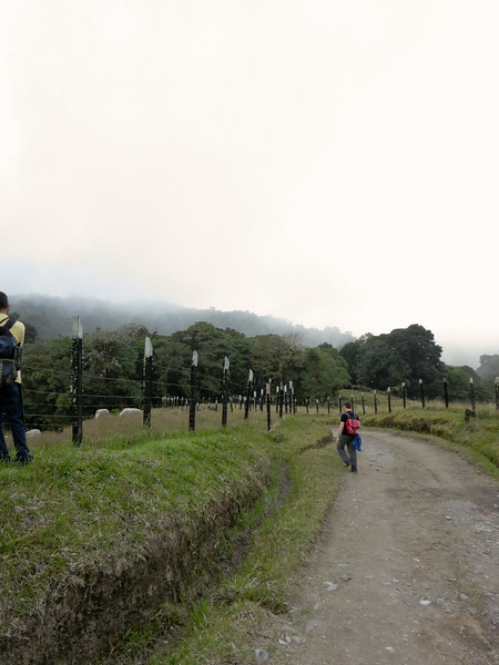 Leaving the forest into the mist, Volcan Baru Hike
