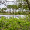 Gator Lake St Andrews State Park