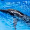 Dophin Panama City Florida