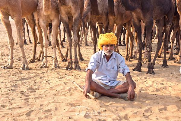 A camel herder resting