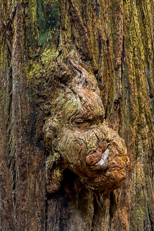 California; Jedediah Smith Redwoods State Park; USA