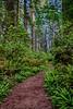 California; Damnation Creek Trail; Del Norte Redwoods State Park; USA