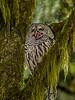 California; Ladybird Johnson Grove; Ladybird Johnson Grove; Orick