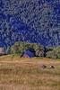 Bold Hills; California; Orick; Redwood National & State Parks