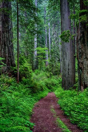 California; Damnation Creek Trail; Del Norte Redwoods State Park