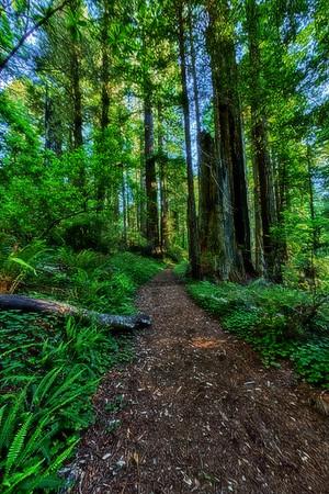 California; Damnation Creek Trail; Del Norte Redwood State Park; Del Norte Redwoods State Park