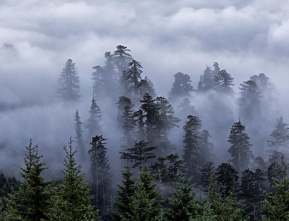 California; Orick; Redwood Creek; Redwood National & State Parks