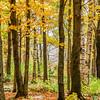 Rib Mountain Fall Color