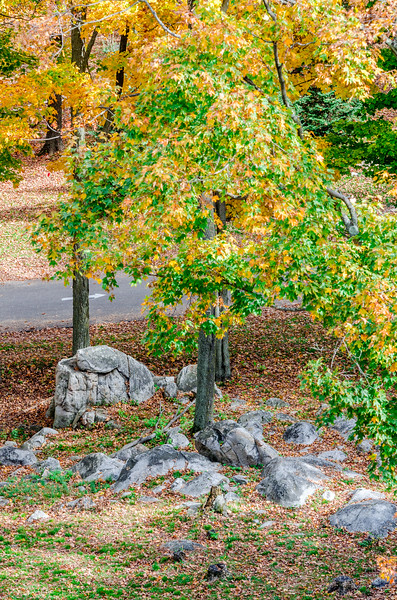 Rib Mountain Rock Tree